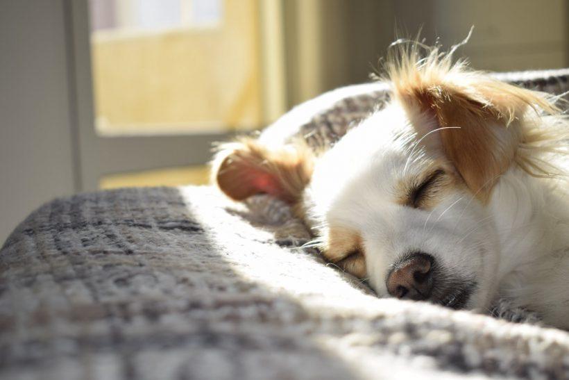 Boektiek hond